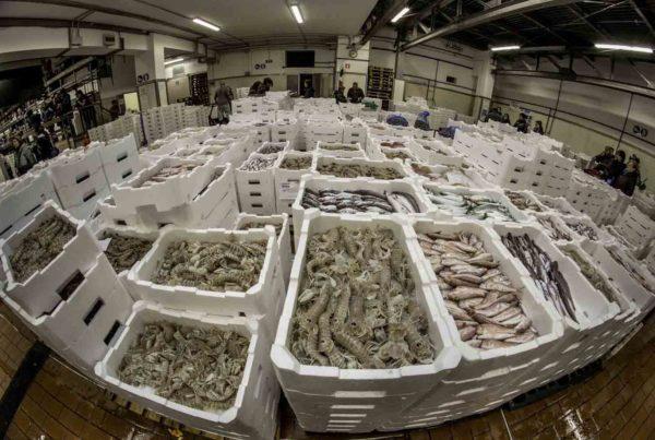 Mercato ittico Mandracchio